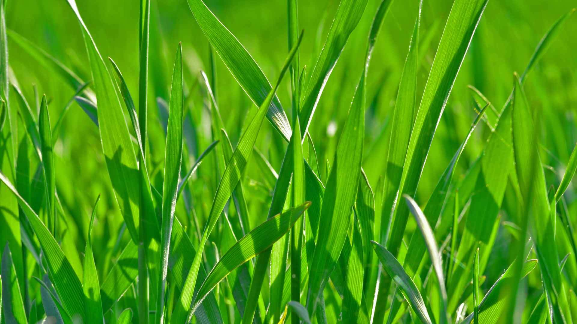Close up of grass.